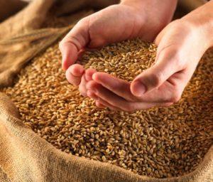 Изображение №1 - Как выбрать влагомер зерна? - Элтемикс Агро