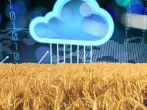Изображение №1 - Преимущества подключения БИК-анализаторов к зерновой сети - Элтемикс Агро