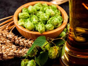 Изображение №1 - Немецкие ученые разработали новый метод анализа содержания хмелевых тиолов в пиве - Элтемикс Агро