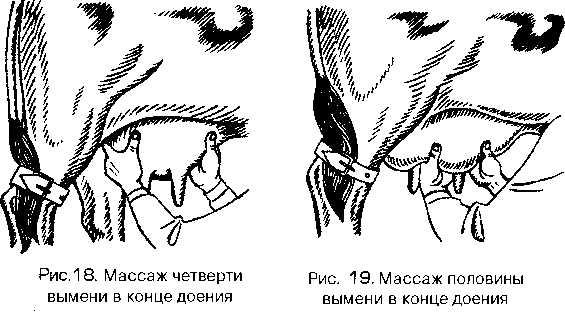 Изображение №3 - Обработка вымени КРС до и после доения - Элтемикс Агро