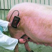 Фото 2 Детектор беременности Draminski для свиней