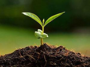 Изображение №1 - Кислотность почвы: тенденции и борьба - Элтемикс Агро